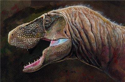 (5/52ほねばたけ へたか)ティラノサウルス ポストカード