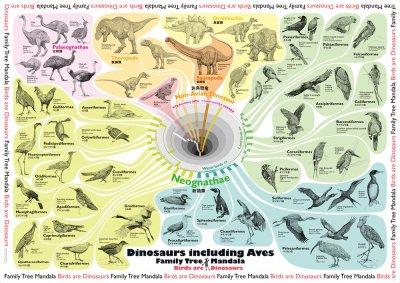04-08 科学バー 系統樹マンダラポスター【鳥類=恐竜編】A3ラミネート加工